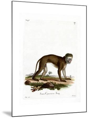Malbrouck Monkey--Mounted Giclee Print