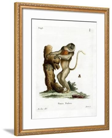 Proboscis Monkey--Framed Giclee Print