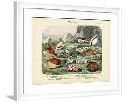 Molluscs, C.1860--Framed Giclee Print