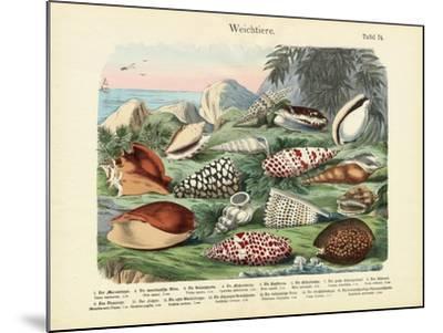 Molluscs, C.1860--Mounted Giclee Print