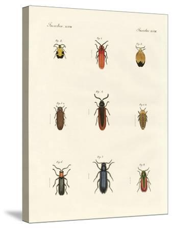 Strange Beetles--Stretched Canvas Print