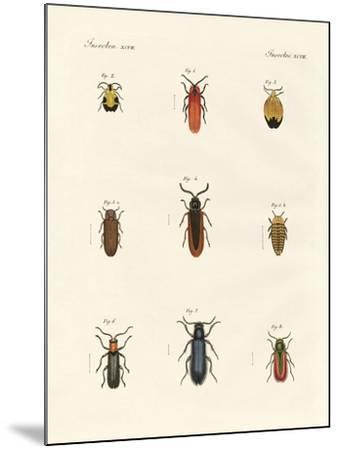 Strange Beetles--Mounted Giclee Print