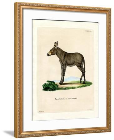 Hybridd Zebra--Framed Giclee Print