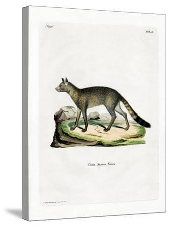 Brazilian Fox--Stretched Canvas Print