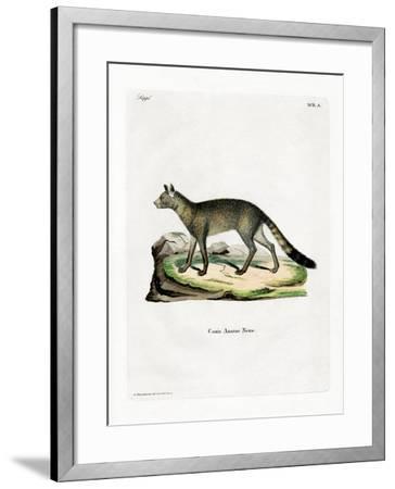 Brazilian Fox--Framed Giclee Print