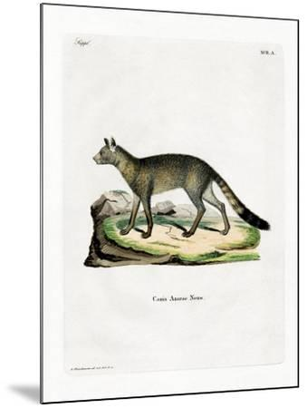 Brazilian Fox--Mounted Giclee Print
