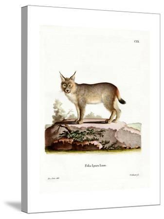 Eurasian Lynx--Stretched Canvas Print