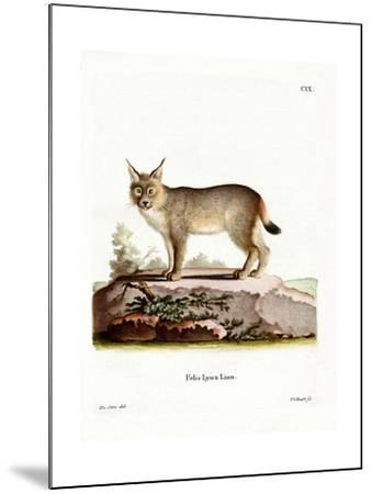 Eurasian Lynx--Mounted Giclee Print