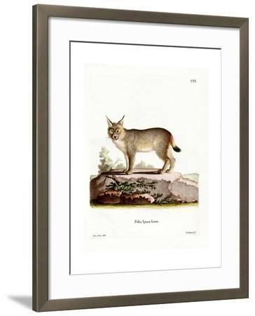 Eurasian Lynx--Framed Giclee Print