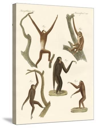 Strange Gibbons--Stretched Canvas Print