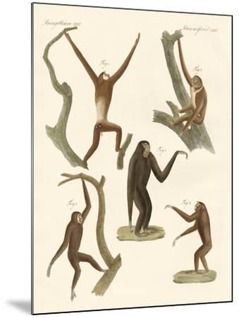 Strange Gibbons--Mounted Giclee Print