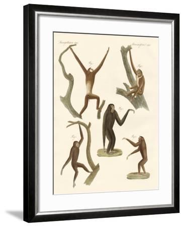 Strange Gibbons--Framed Giclee Print