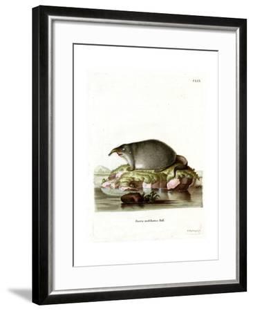Russian Desman--Framed Giclee Print