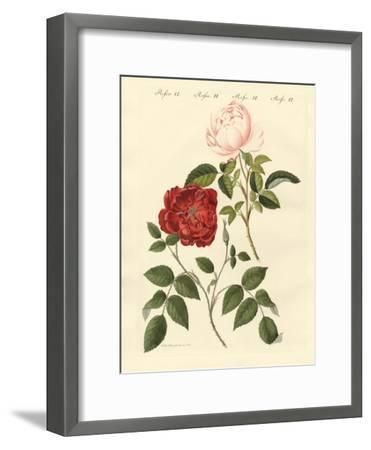 Kinds of Roses--Framed Giclee Print