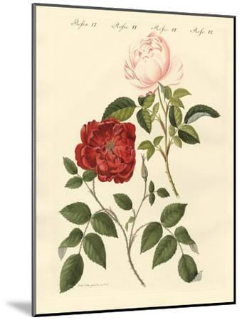 Kinds of Roses--Mounted Giclee Print