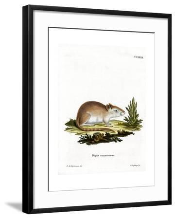 Tamarisk Jird--Framed Giclee Print