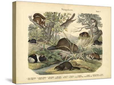 Mammals, C.1860--Stretched Canvas Print