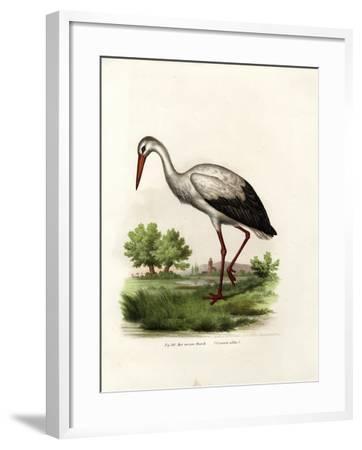 White Stork, 1864--Framed Giclee Print