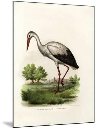 White Stork, 1864--Mounted Giclee Print