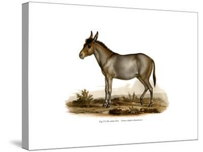 Donkey, 1860--Stretched Canvas Print