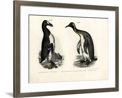 Great Auk, 1864--Framed Giclee Print
