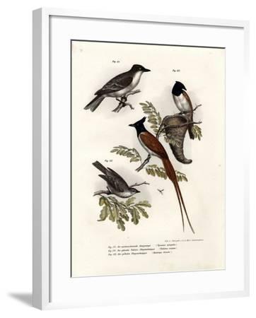 King Bird, 1864--Framed Giclee Print