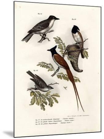 King Bird, 1864--Mounted Giclee Print