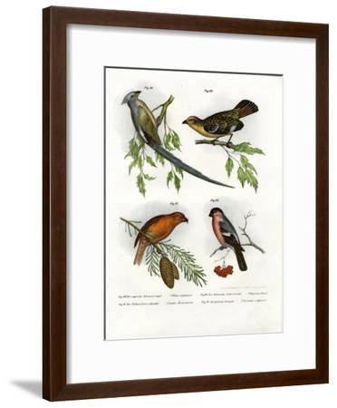 Mousebird, 1864--Framed Giclee Print