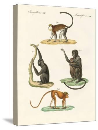 Strange Monkeys--Stretched Canvas Print