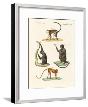 Strange Monkeys--Framed Giclee Print