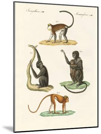 Strange Monkeys--Mounted Giclee Print