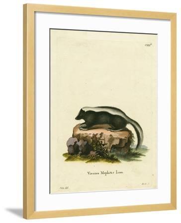 Striped Skunk--Framed Giclee Print