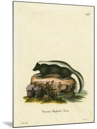 Striped Skunk--Mounted Giclee Print