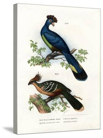 Great Turaco, 1864--Stretched Canvas Print