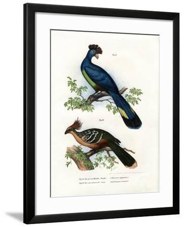 Great Turaco, 1864--Framed Giclee Print
