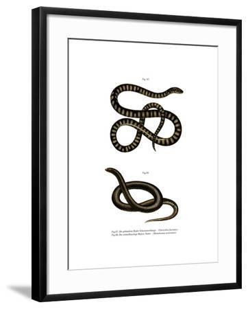 Little File Snake--Framed Giclee Print