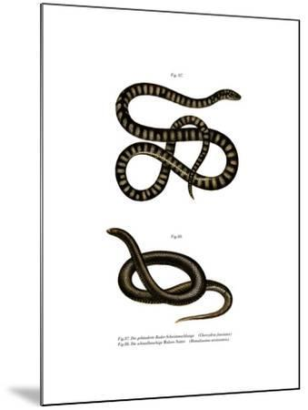 Little File Snake--Mounted Giclee Print
