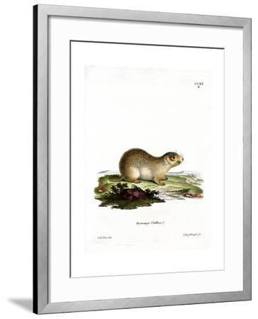 European Souslik--Framed Giclee Print