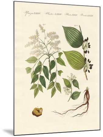 Medical Plants--Mounted Giclee Print