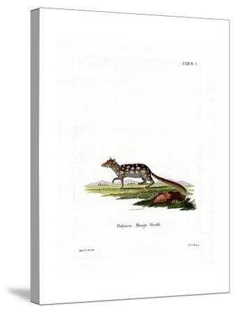 Eastern Quoll--Stretched Canvas Print