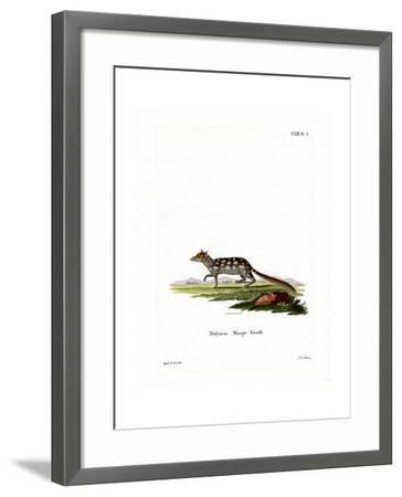 Eastern Quoll--Framed Giclee Print