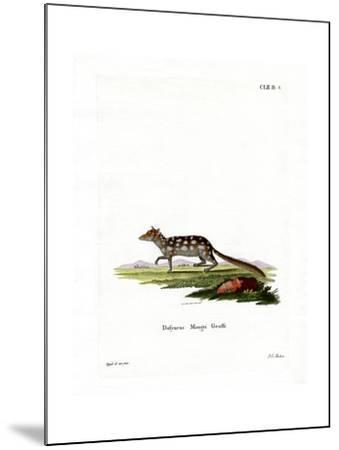 Eastern Quoll--Mounted Giclee Print