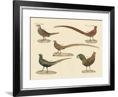 Beautiful Pheasants--Framed Giclee Print
