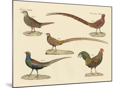 Beautiful Pheasants--Mounted Giclee Print