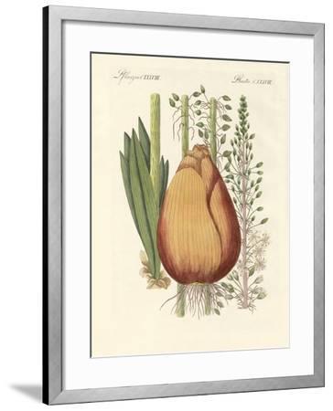 Medical Plants--Framed Giclee Print