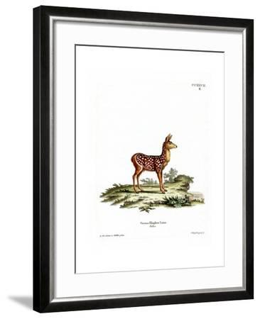 Red Deer Fawn--Framed Giclee Print