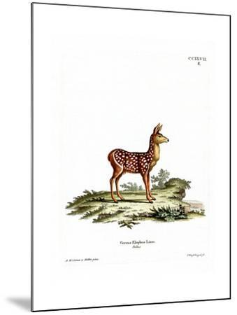 Red Deer Fawn--Mounted Giclee Print