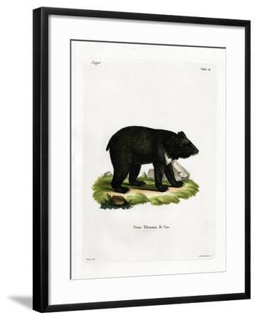 Asian Black Bear--Framed Giclee Print
