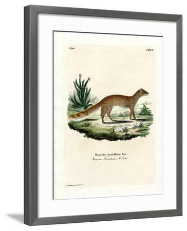 Yellow Mongoose--Framed Giclee Print