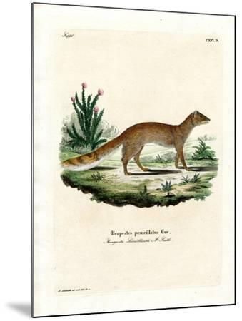 Yellow Mongoose--Mounted Giclee Print